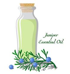 Essential oil of juniper vector image