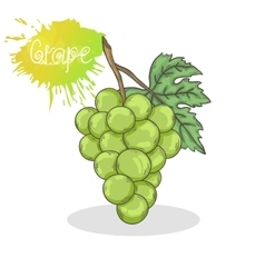 Green grape vector image