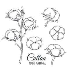 Hand drawn decorative cotton flowers vector