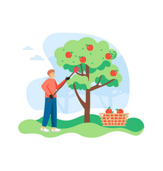 Young man gardener picking apples from apple tree vector