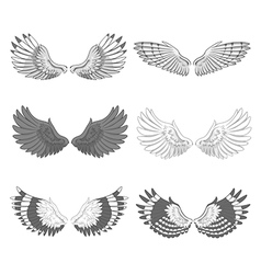 Bird Wings vector image