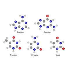 Structures of purine and pyrimidine bases vector