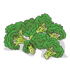 Isolate ripe broccoli stalks vector