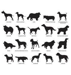 Set of dogs silhouettes-2 vector