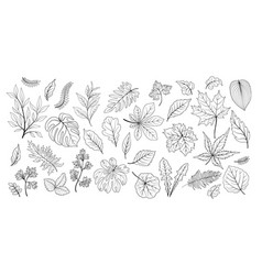 leaves set different plant leaf herb floral vector image