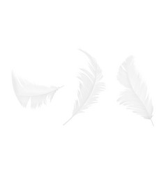 realistic 3d set of white bird feathers vector image