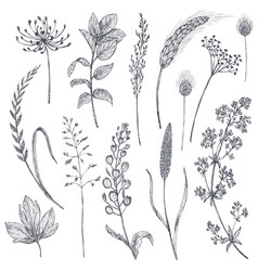 set herbs and flowers hand drawn vector image