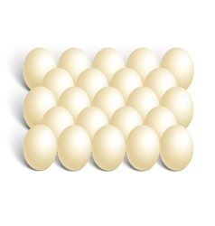 chicken eggs on white background vector image vector image