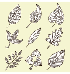 set of 9 decorative leaves vector image vector image
