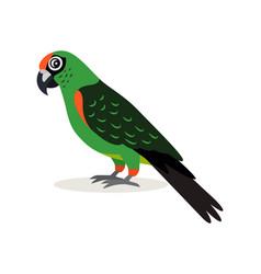 african animal colorful green parrot lovebird vector image