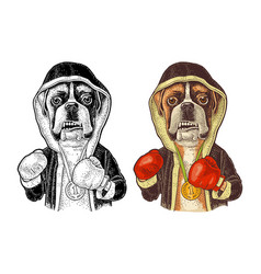 Dog boxer dressed in human in robe gloves vector