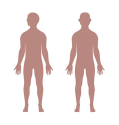 male anatomical shape vector image