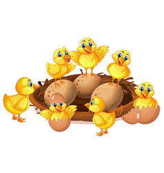 Many chicks and eggs in nest vector