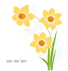 Greeting card with narcissus vector image