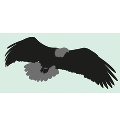 silhouette eagle vector image vector image
