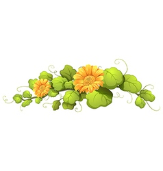 A vine plant with blooming flowers vector