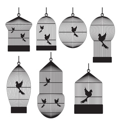 Birds in cages vector
