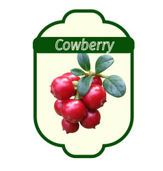 cowberry label vector image