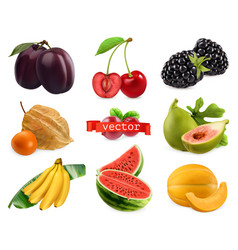 fresh fruits and berries plum cherry blackberry vector image