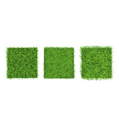 green grass border on white background top view vector image