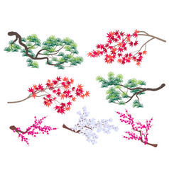 Korean pine japanese maple and blooming cherry vector