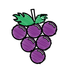 Paint grape cluster icon image vector