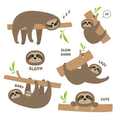 sloth set mother with bacute lazy cartoon vector image