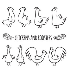 chickens and roosters vector image
