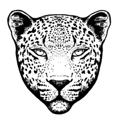 Graphical leopard head - vector image