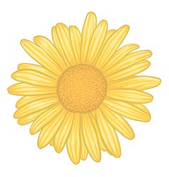 beautiful yellow daisy flower with effect vector image