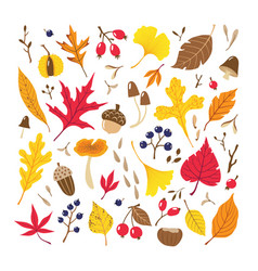 fall colorful leaves berries seeds and mushrooms vector image