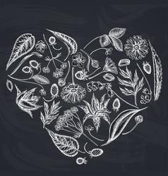 Heart floral design with chalk aloe calendula vector