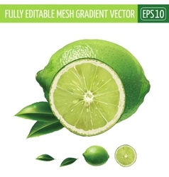 Lime on white background vector