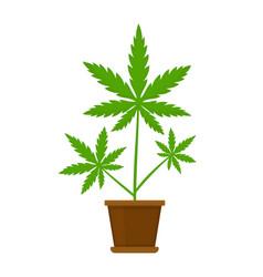 Marijuana or cannabis plant in a flower vector