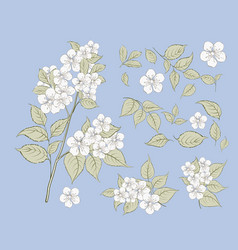 set sakura flowers elements collection of vector image