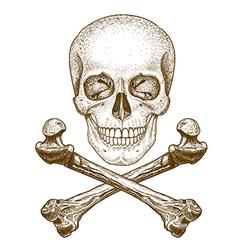engraving skull and bones vector image