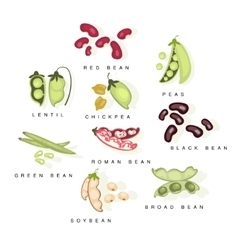 Bean Cultures With Names Set vector image vector image