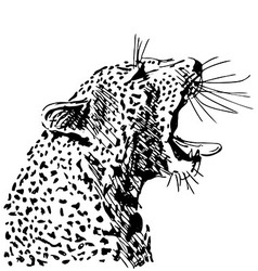 Hand sketch of the head of a roaring leopard vector image