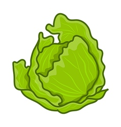green cabbage cartoon vector image