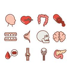 human body anatomy organs health head heart vector image
