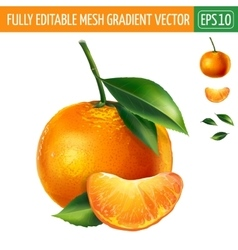 Mandarin on white background vector