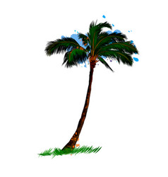 palm tropical tree from a splash watercolor vector image