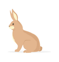 rabbit rodent bunny vector image