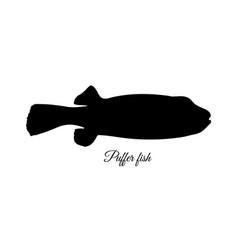 Silhouette fugu fish vector