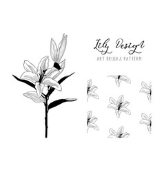 lily flower design art brush and pattern vector image