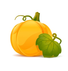 Pumpkin with leaf vector image vector image