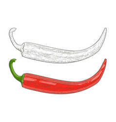 Chili pepper black and white and red hand drawn vector