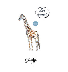 Giraffe made in watercolor vector