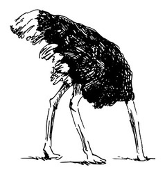 Hand sketch ostrich with your head in the sand vector