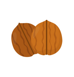 nuts walnut flat modern style vector image